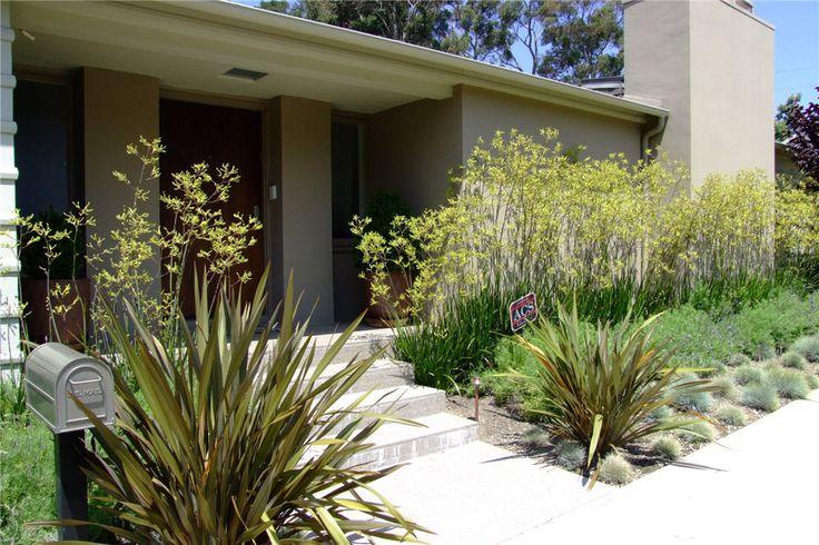 Anigozanthus flavidos yellow Kangaroo paws 'yellow', Phormium green tenax New Zealand flax, Fescue grass
