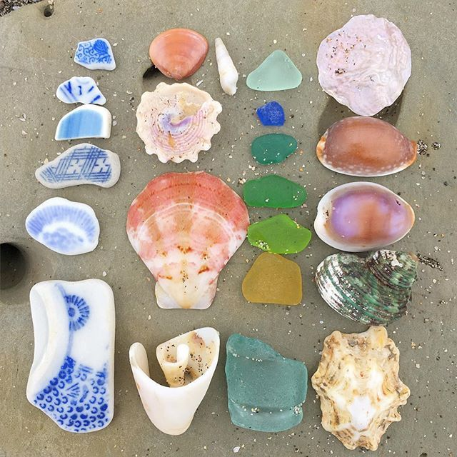 おはようございます。 今日の収穫 キンチャクガイ、グリーンのサザエ、青いビーチグラスなど。 #beach #morning #bechcombing #shell #beachglass #seapottery #sea #kamakura #shichirigahama