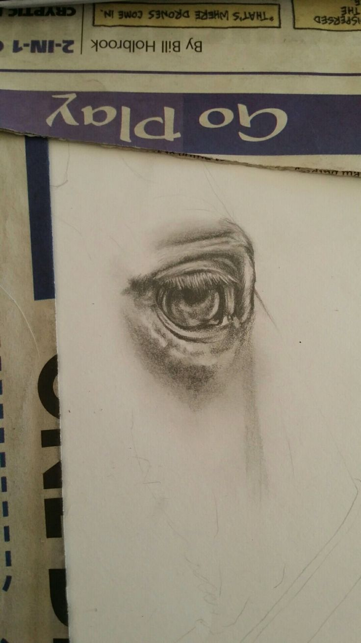 My own horses very expressive eye. Pencil drawing