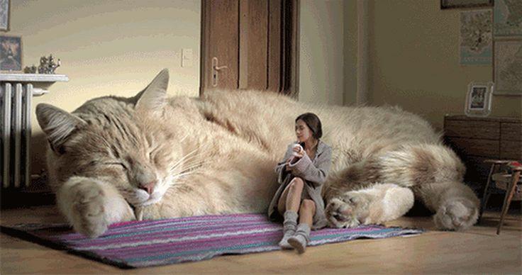 Yo quiero uno ❤❤❤❤ - Lina Batista - Google+