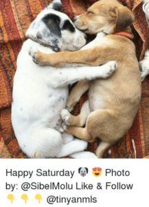 #Happy #Saturday #Meme to share