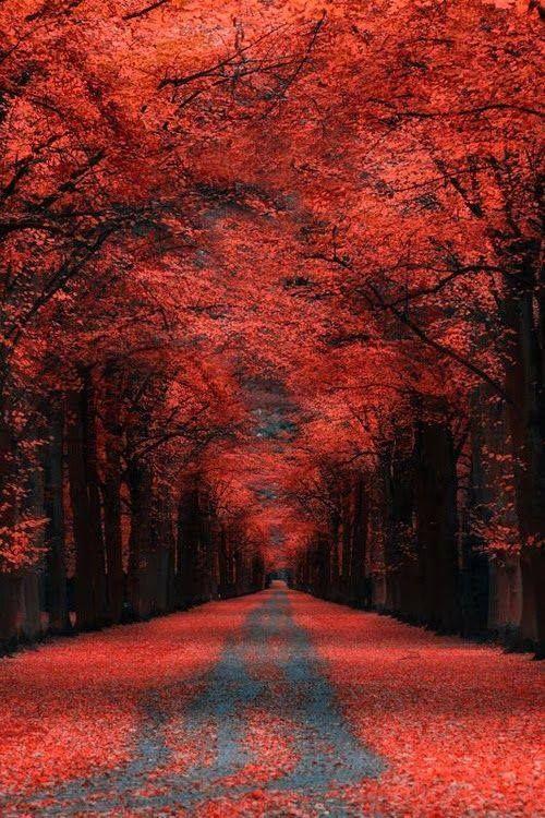 otro precioso lugar para dar un paseo ¿Qué os parece? :) #bosques #relax #pasear