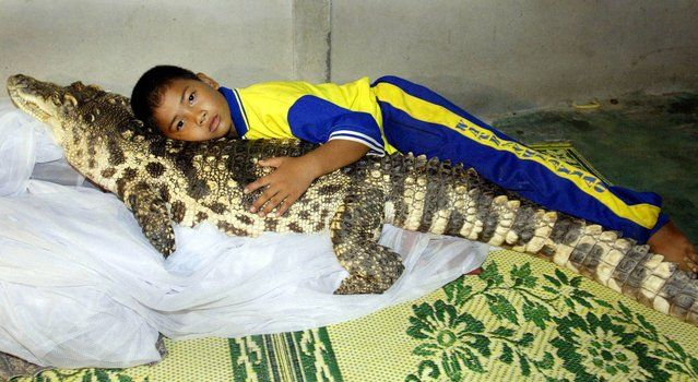 """Wattana Thongjon, 10, lays in his bed alongside his pet crocodile """"Kheng"""" at his home in Thailand's rural Phichit province August 28, 2002. Wattana's father Prayoon found the crocodile as a hatchling in a local pond three years ago and it has grown to over one-metre in length and weighs 40 kg (88 pounds). The croc is pampered with a diet of fresh chicken, has his sharp teeth brushed every day by Prayoon, and lives indoors with their two pet dogs. (Photo by Reuters)"""