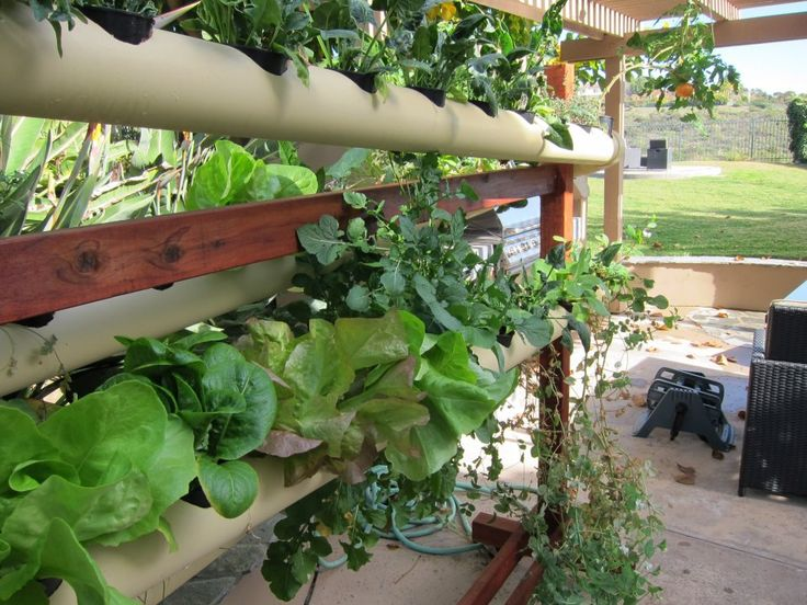 55 Best Images About Garden Pvc On Pinterest Gardens