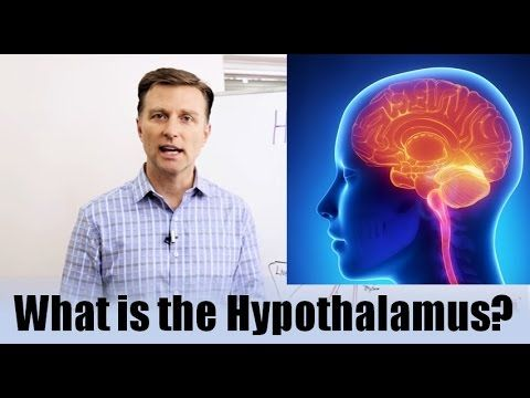 What is the Hypothalamus?  See Full Video: https://www.drberg.com/blog/hormones/what-is-the-hypothalamus