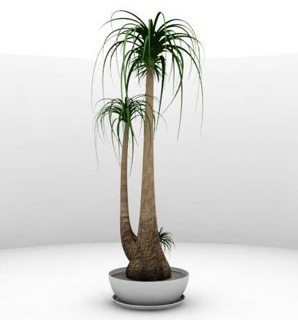 Tall House Plants 123 best indoor plants, oh my! images on pinterest | plants