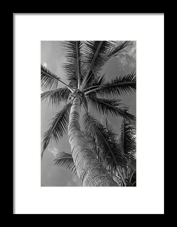 Palm tree black and white nature florida michiale schneider photography interior