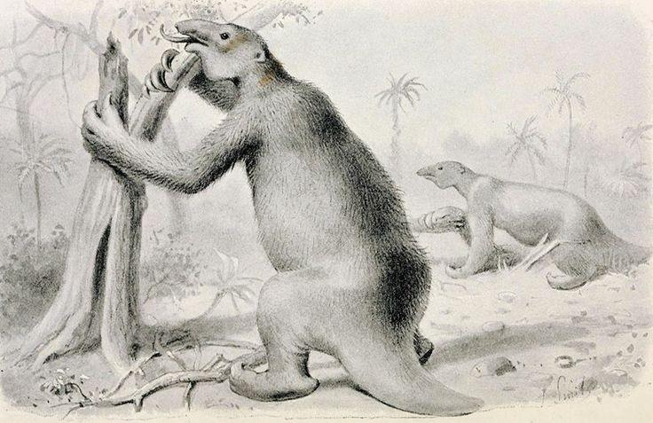 Megaterium /Great Ground-Sloth of South America, Megatherium americanum/ (Hutchinson 1896)