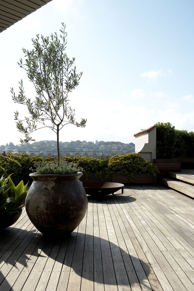 Rooftop garden. Olive Trees in feature pots underplanted with Senecio sp. Robert Plumb Fire Pit. Woollahra, NSW Australia Anthony Wyer + Associates www.anthonywyer.com