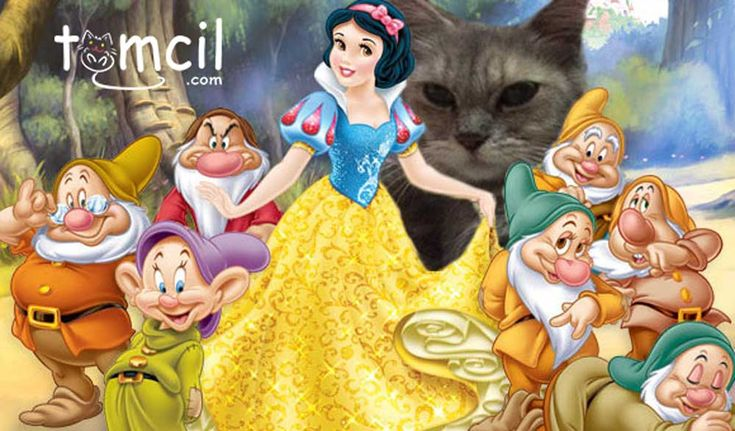 Tomcil and Snow White