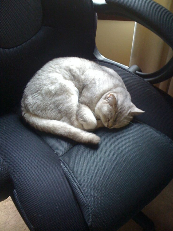 The photo shows our cat Misty, doing what she does best.   Finding something soft and sleeping on it.  Which in this case it's my chair where I spend an enormous amount of time working hard at being a penny blogger.  Sometimes I'll only leave the room for a moment and when I come back to work someone's taken my place.