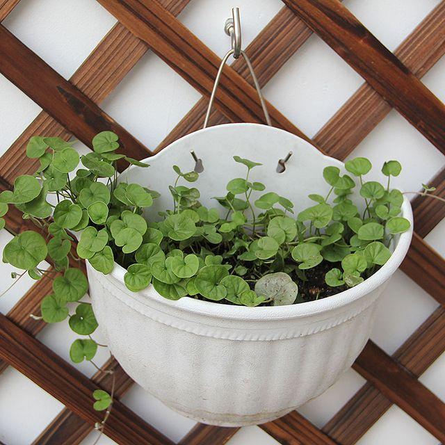 Plant a flower pot planter Hanging wall bucket houseplant pots wall hanging basket planter pots balcony basket sweat