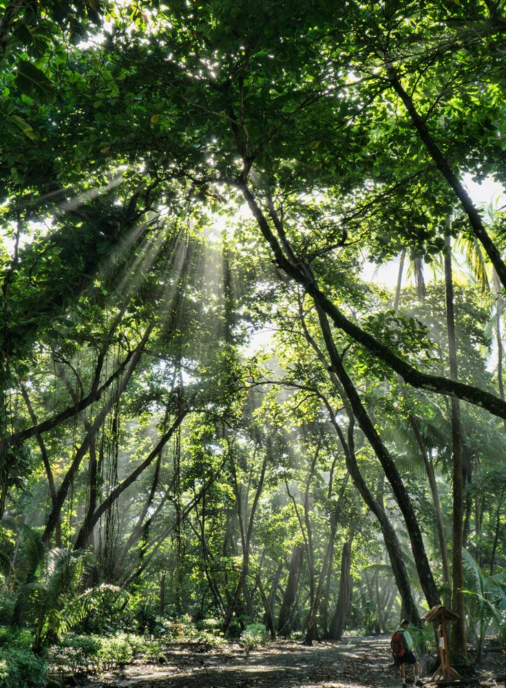 The Sun Shines Through - Hiking in Corcovado National Park - Costa Rica's premier rainforest!