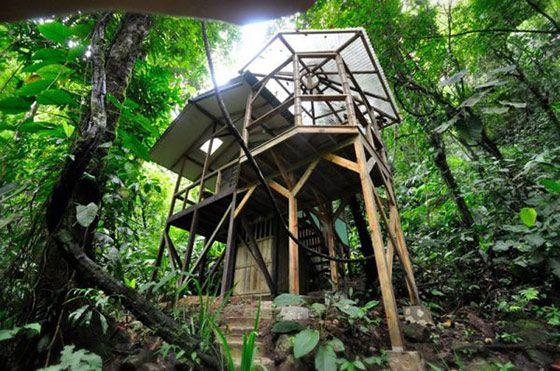 オラウータンになって森に住もう、陽気な国のツリーハウス村 in コスタリカ   VIP WORKS