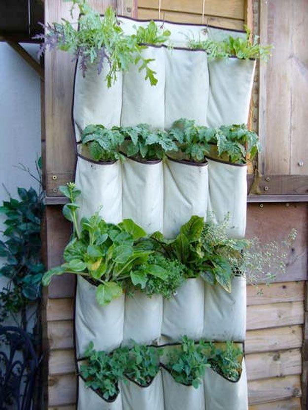 Aproveite uma sapateira de lona e faça uma horta com seus temperos favoritos.