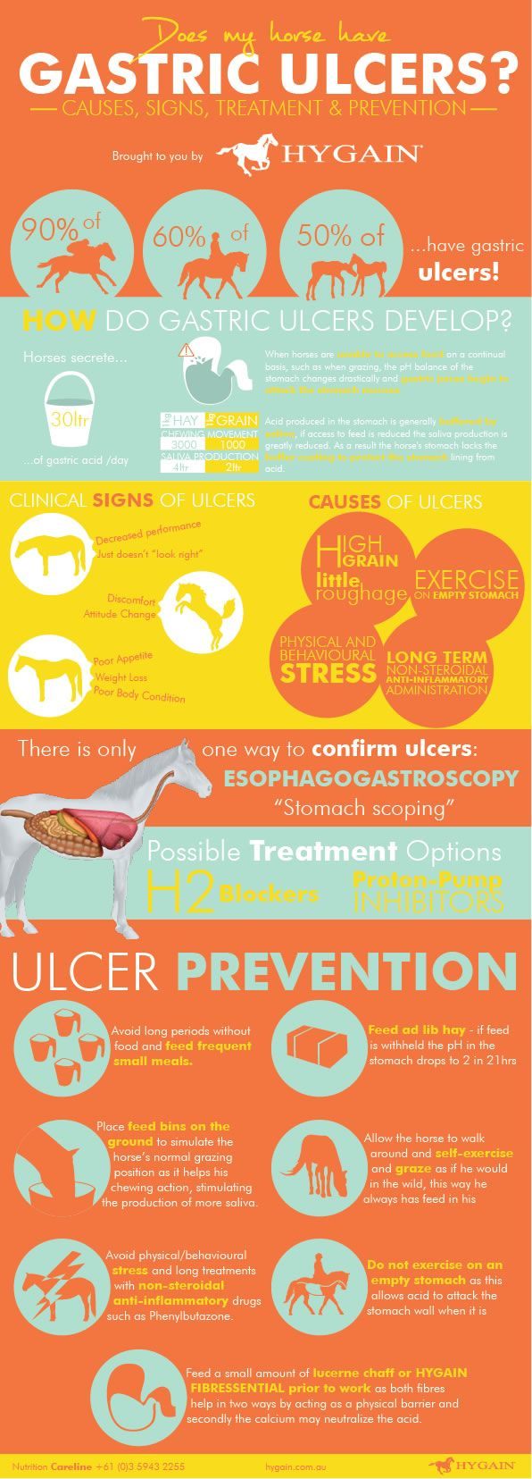 **FREE Ulcers in horses Fact Sheet** It is scary knowing that 37% to 60% of our beloved show and pleasure horses suffer from ulcers. Is your horse playing up and showing signs of discomfort especially around the girth area? Maybe his appetite is reduced and his body condition is slowly decreasing, these could all be signs of gastric ulcers and not just a mood or phase your horse is going through.