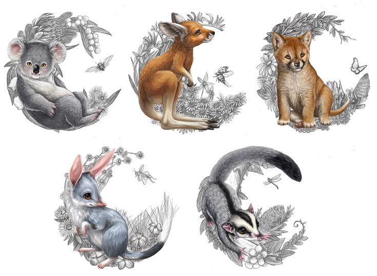 Coin and shipper illustrations done for the Australian Bush Babies coin series from The Perth Mint. The series was an instant success with each coin's mintage of 10,000 selling out within days of r...