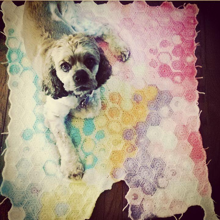 I guess he knew this one is his  #motretforfun #mffseekor #knitpicks # watercolors #crochetaddict #crochet #crocheting #crochetlove #crochetofinstagram #crochetblanket #sulam #selimut #jualrajut #rajut #rajutan #rajutindonesia #americancockerspaniel by regieoww_crochet