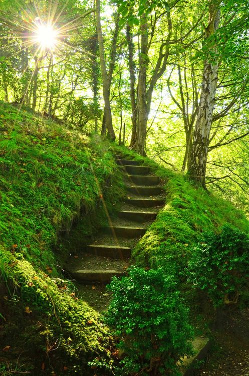 bluepueblo: Mossy Stairs, Perthshire, Scotland photo via jami Warm autumn sun rays casting their brilliant twinkle on a mossy forest path Lace your fingers through mine and take a walk with me ~Charlotte (PixieWinksFairyWhispers)