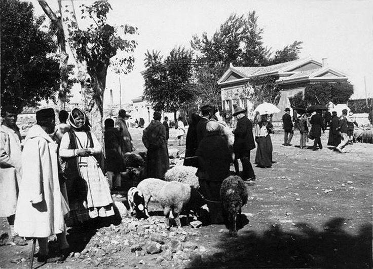 Ναύπλιο, περ. 1900, υπαίθρια αγορά προβάτων.