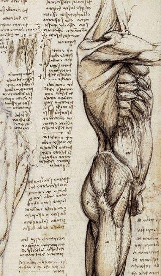 Leonardo Da Vinci. Anatomical Study of the Muscles of the Side of the Torso, c. 1507. See: pinterest.com/pin/287386019946407968/