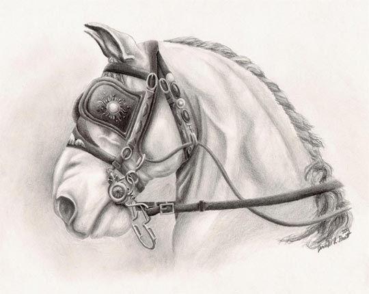 "Horse Art ""Belgian Beauty"" - drawing by equine artist Jen Pratt.  See this artwork at http://www.jenpratt.com"