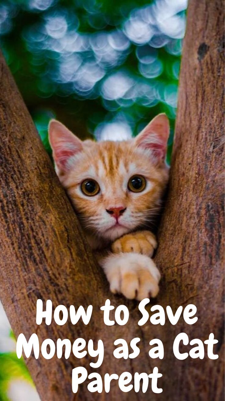 How To Save Money As A Cat Parent In 2020 Cat Parenting Cats Cat Owners