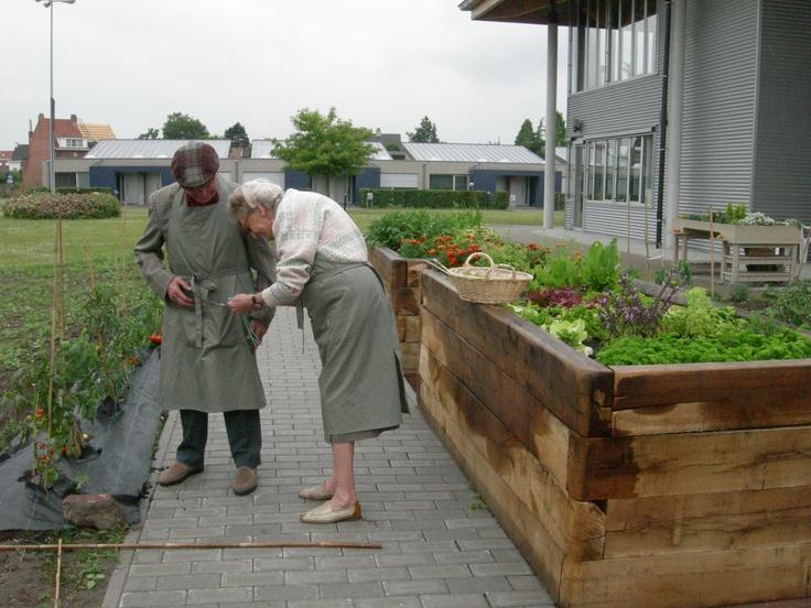 Verhoogde Moestuin Voor Senioren Tuinieren In