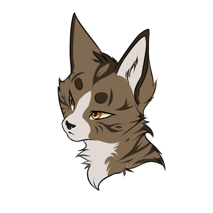 Leafpool by Computernurd on DeviantArt