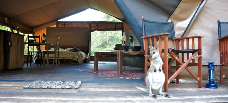 *** Word is getting out ... *** nightfall wilderness camp's Queensland glamping (luxury tent) experience is heavily booked, so please plan your stay well in advance.