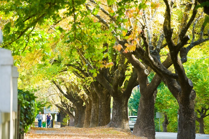 Hahndorf, South Australia. Must visits are Chocolate No. 5, Humbugs and Hahndorf Kaffeehaus!!!!!!!!!