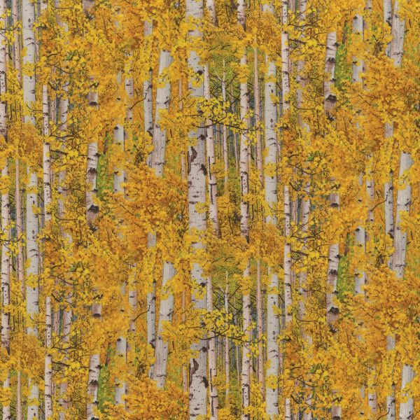 Fall Birch Trees Landscape Basics From Elizabeth S Studio Birch Trees Landscaping Aspen Trees Landscape Trees