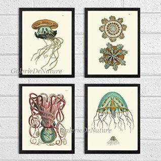 Shabby Chic home decor is elegant by using various painting and aging techniques resulting in charming home decor that can really pull a space together. shabby chic home decor beautifully marries together elements of old and new decorative accents to create my own unique home decor theme  Jellyfish Coral Octopus Squid Sea Marine Nature Print Set of 4 Art Prints Beautiful Antique Fish Aqua Bathroom Bedroom Beach Home Room Wall Decor Unframed NOD