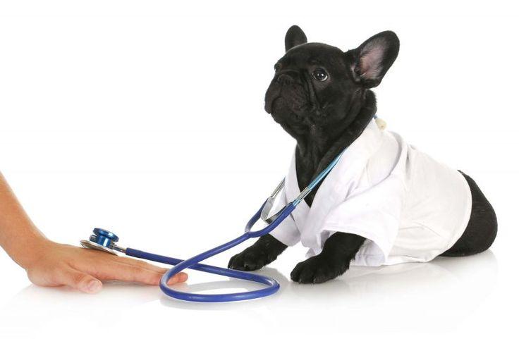 Здоровье собак, о клещах и глистах