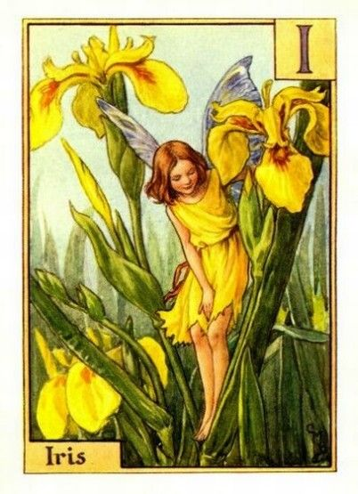 Iris Flower Fairy Vintage Print by Cicely Mary Barker. first published in London by Blackie, 1934 in A Flower Fairy Alphabet.