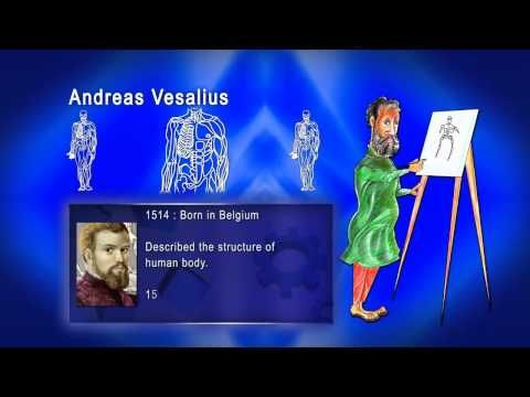 andreas vesalius project A secondary school revision resource for gcse history about school history projects and renaissance knowledge about the body  project  medieval and  vesalius.