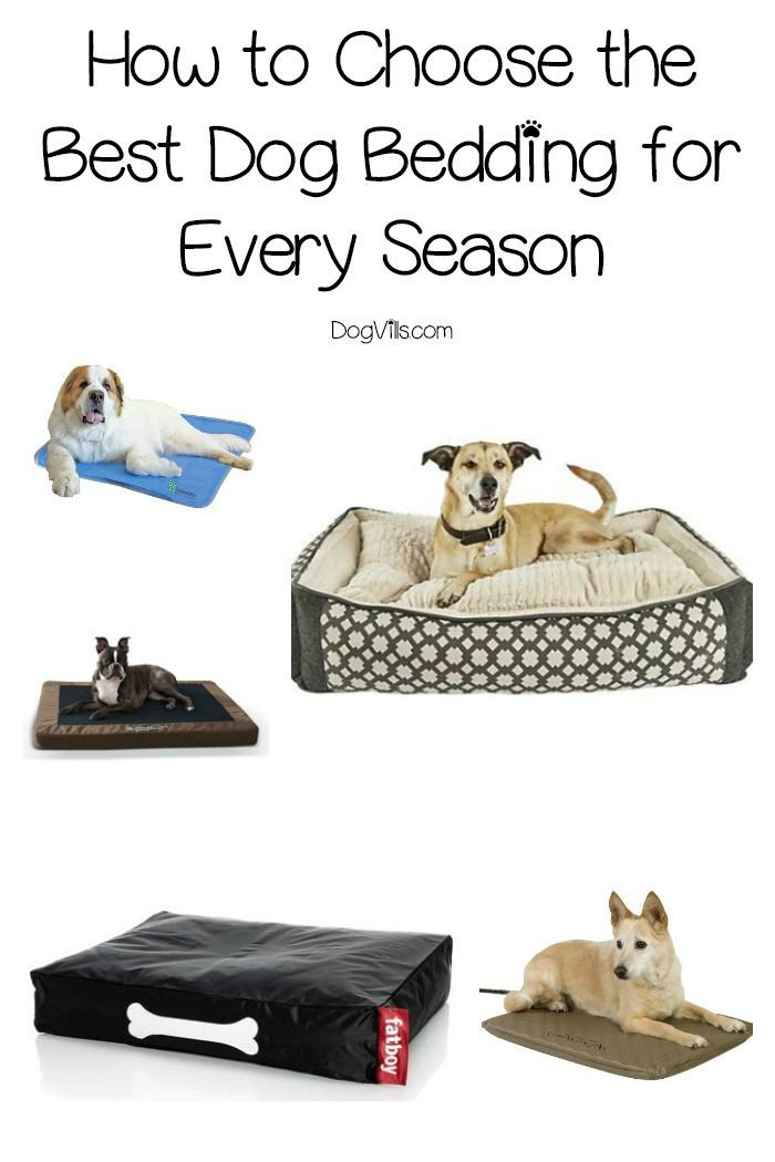 15 Best Dog Beddings For All Seasons Complete Guide Cool Dog