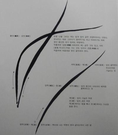 난(蘭) 그리기 운곡 강장원 1) 봉안(鳳眼) 난(蘭)을 그리는 일은 잎을 어떻게 그리느냐에 따라 성패가 결정된다. 첫붓에 정두, 당두, 서미의 세법이 있다. 난을 그릴 때 붓은 중붓을 이용하여 붓의상단을 잡고 팔꿈치를 들어 팔전체의