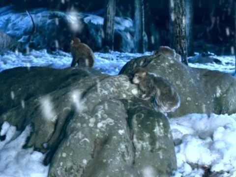 Indochine - Un singe en hiver - YouTube