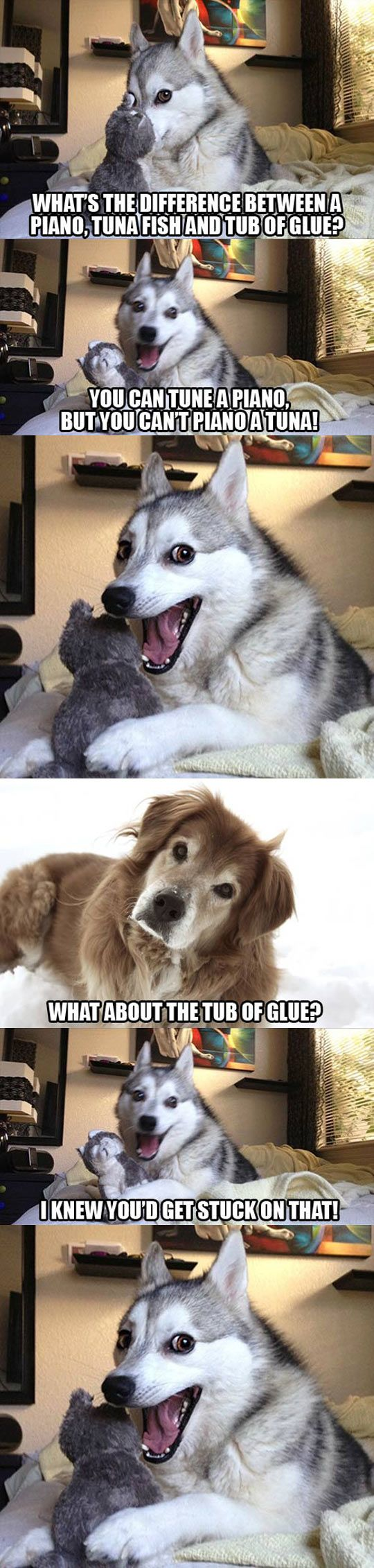 Huskies Tell The Best Jokes