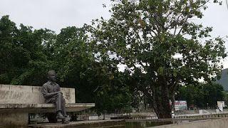 Argonaut: Pohon sukun renungan Bung Karno