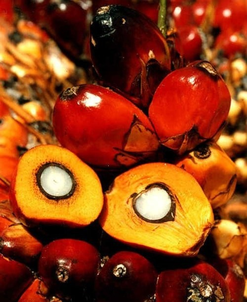 1000 images about red palm oil on pinterest in portuguese natural red and dr oz. Black Bedroom Furniture Sets. Home Design Ideas
