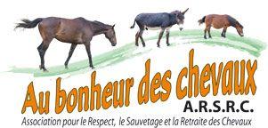 au bonheur des chevaux