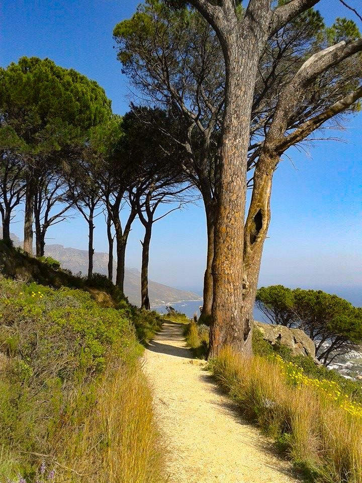 The Pipe Track is an easy to moderate hike offering incredibly rewarding mountain and ocean views over Lion's Head, Camps Bay and Bakoven (Cape Town, South Africa) from Via Volunteers
