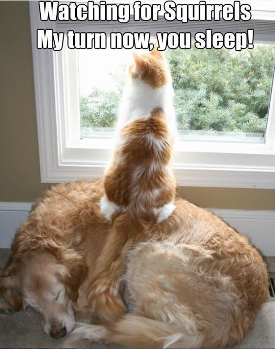 Duo squirrel squad!: Sleep Dogs, Funny Pics, Best Friends, Step Stools, Funny Cat, Dogs Cat, Funny Animal, So Funny, Window Seats