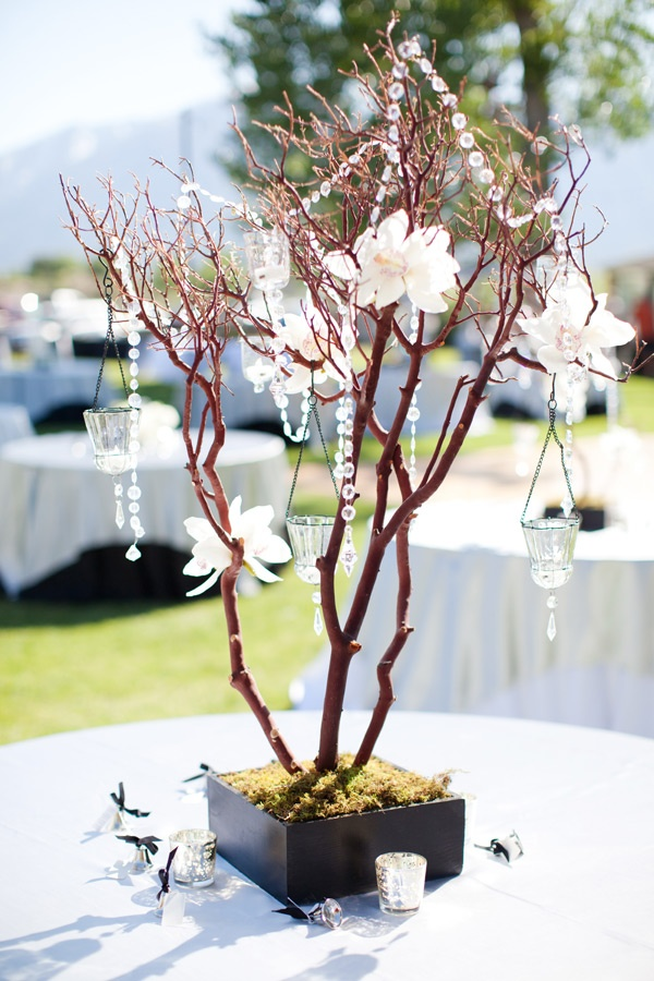 Best images about manzanita branches on pinterest