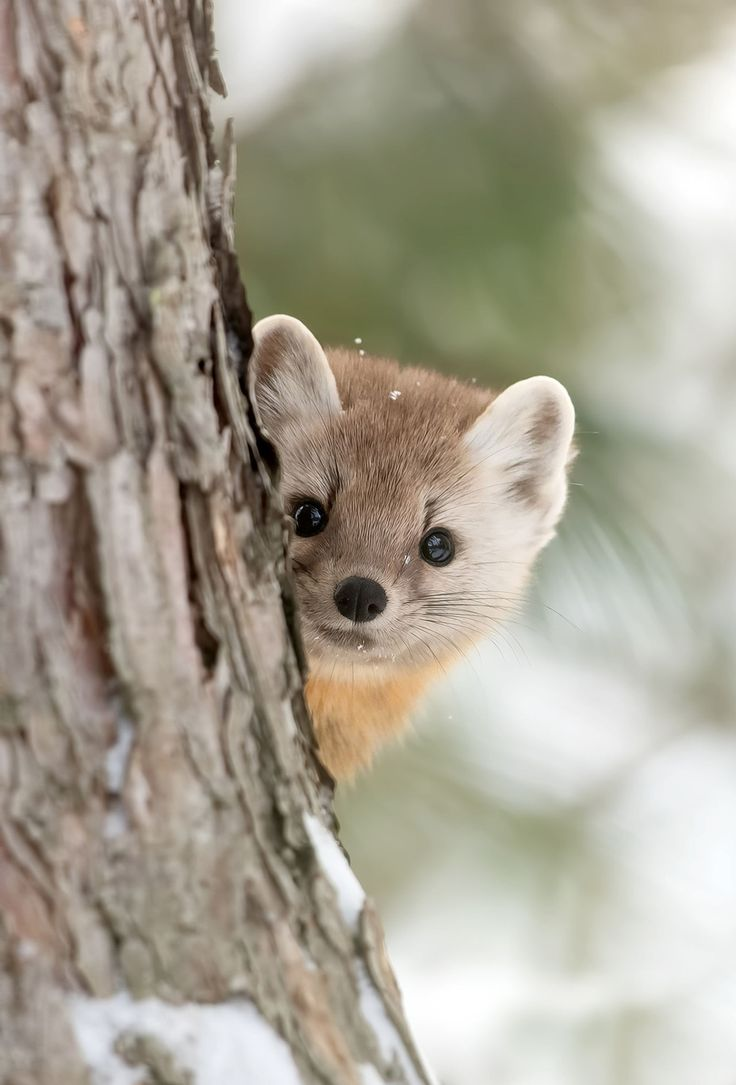 Pin by saylor on cute critters in 2020 animals