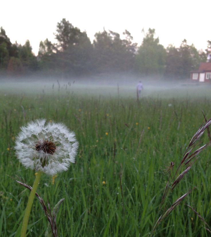 Summer evening fog.