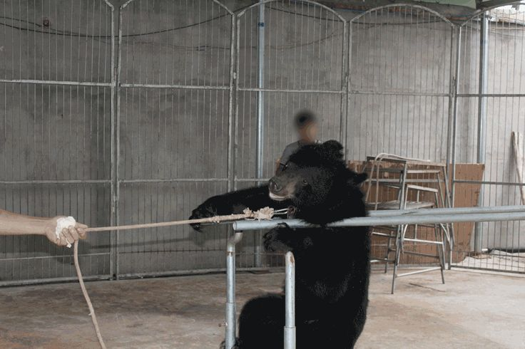 PETA Asia found appalling abuse, decrepit living conditions, and animals suffering on a massive scale in the Chinese circus industry. Take action now!