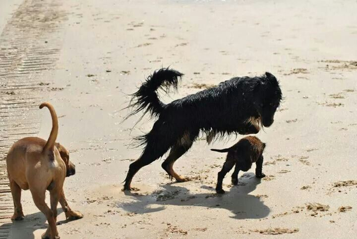 Our dog day's give dogs the chance to play and explore, a exercised dog is a happy dog.